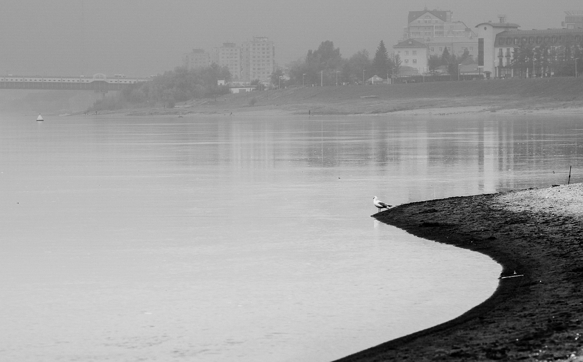 Чайка  в тумане