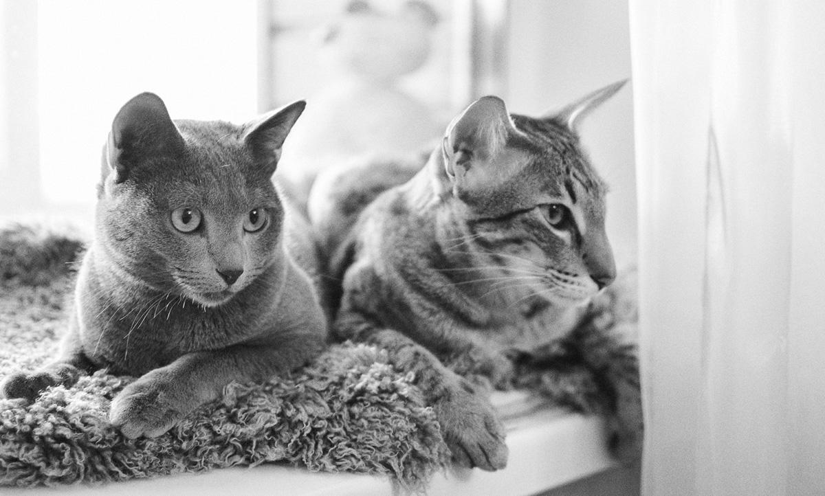 Два кота-2