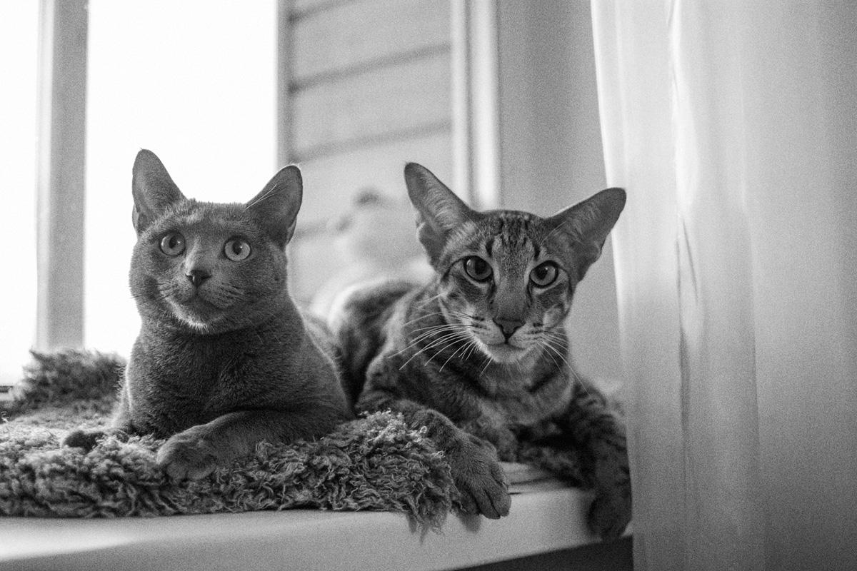 Два кота-3