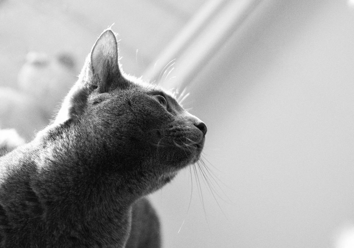 Один кот-2