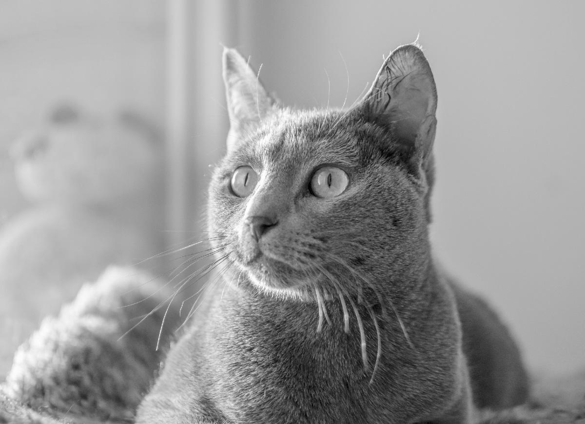 Один кот