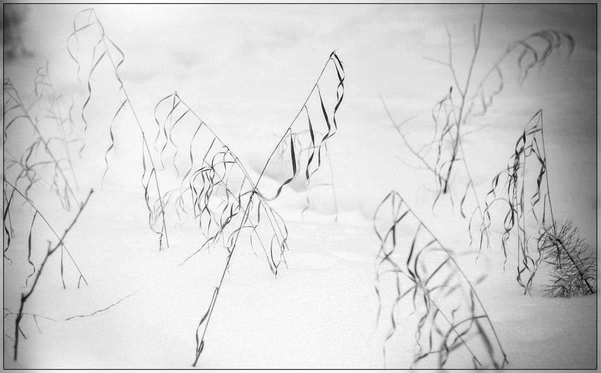 Зимняя каллиграфия
