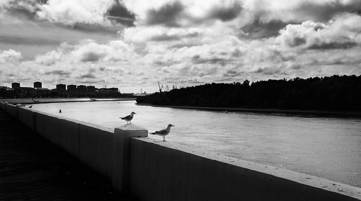 Из жизни птиц-3