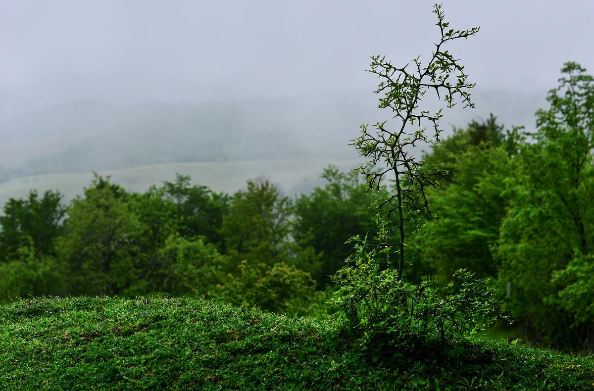 Туман и колючка