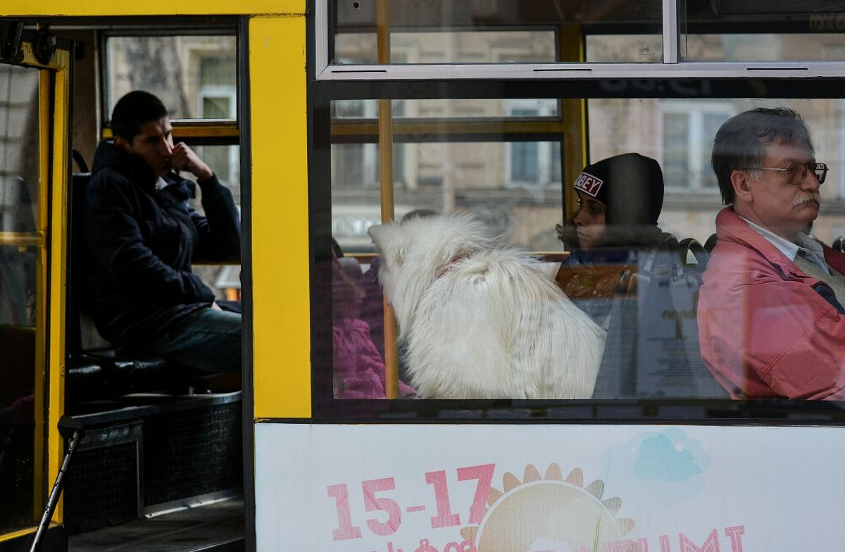 Автобус, девушка, собака