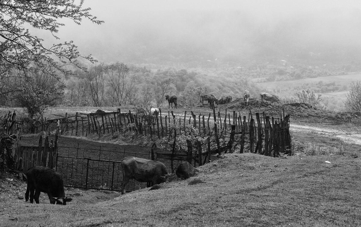 Сельский пейзаж с туманом