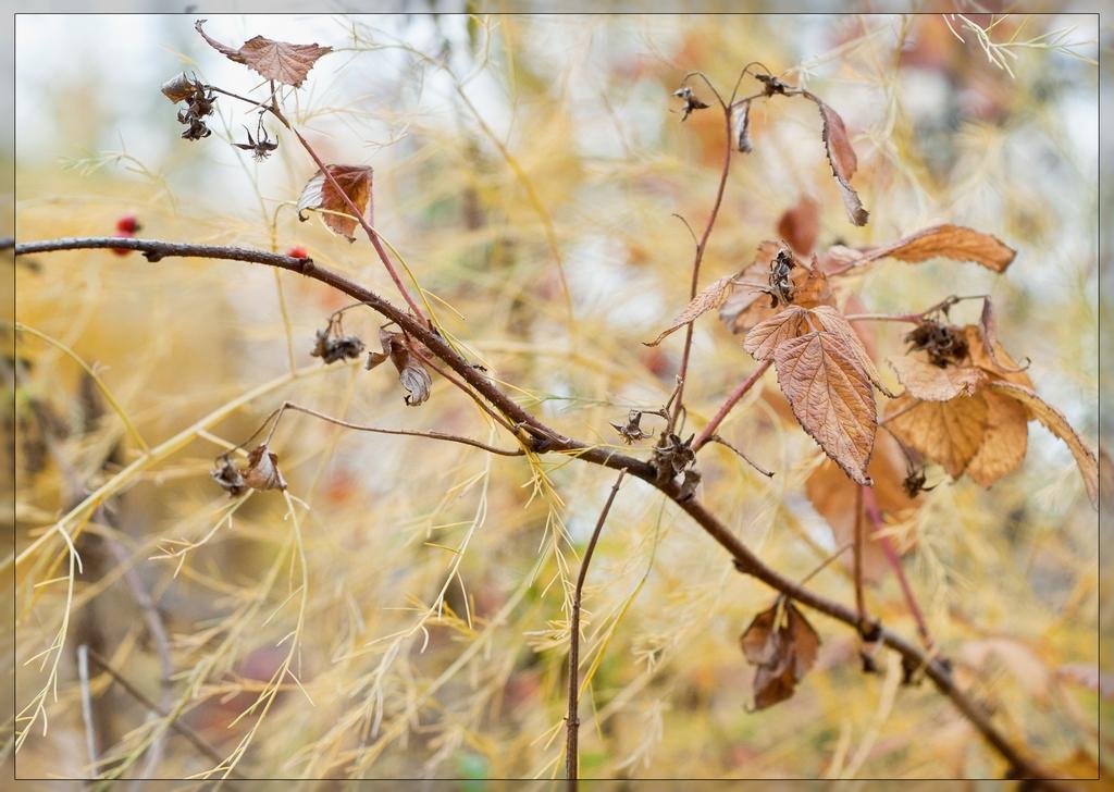 Каллиграфия от природы_осень