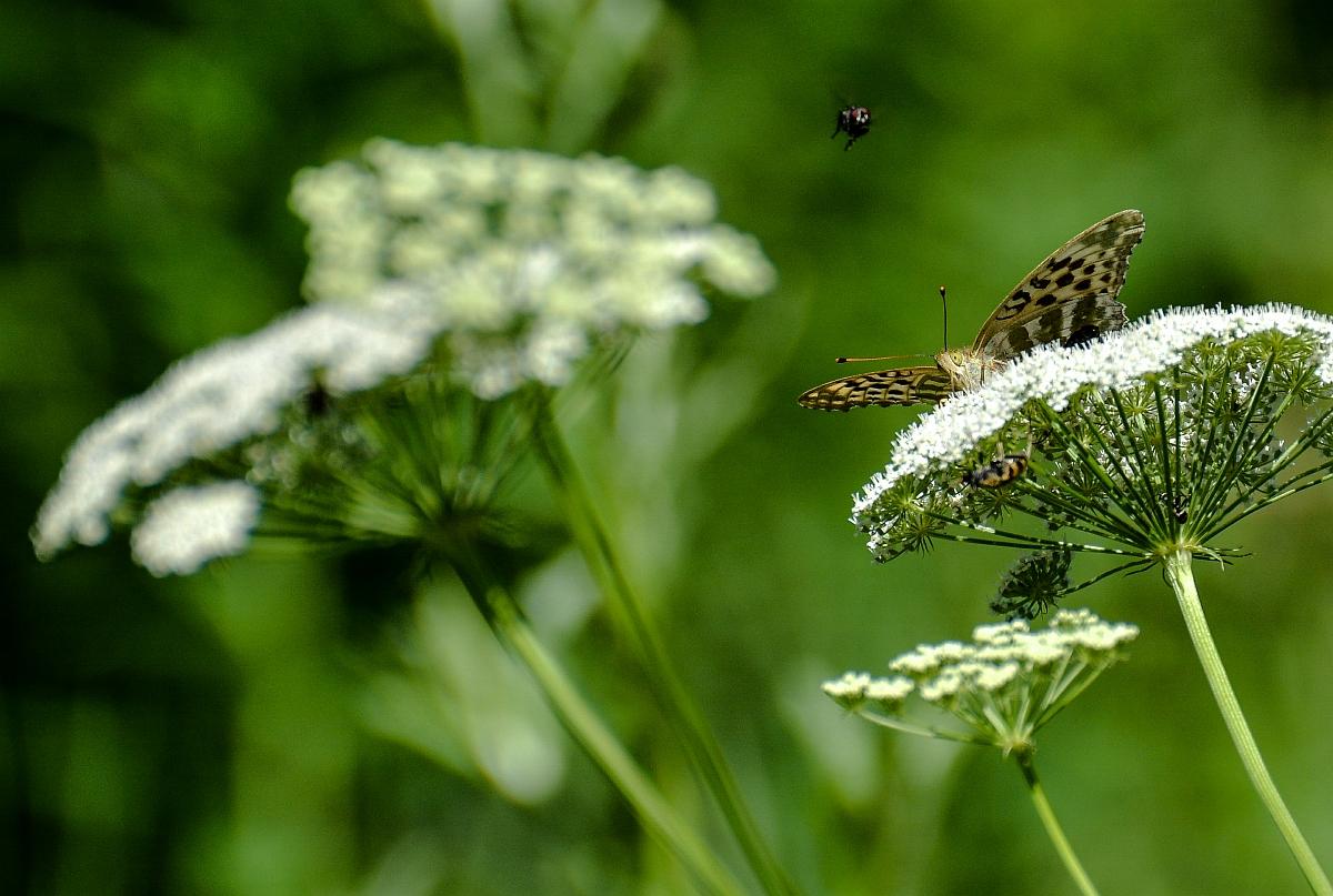 В гости к бабочке