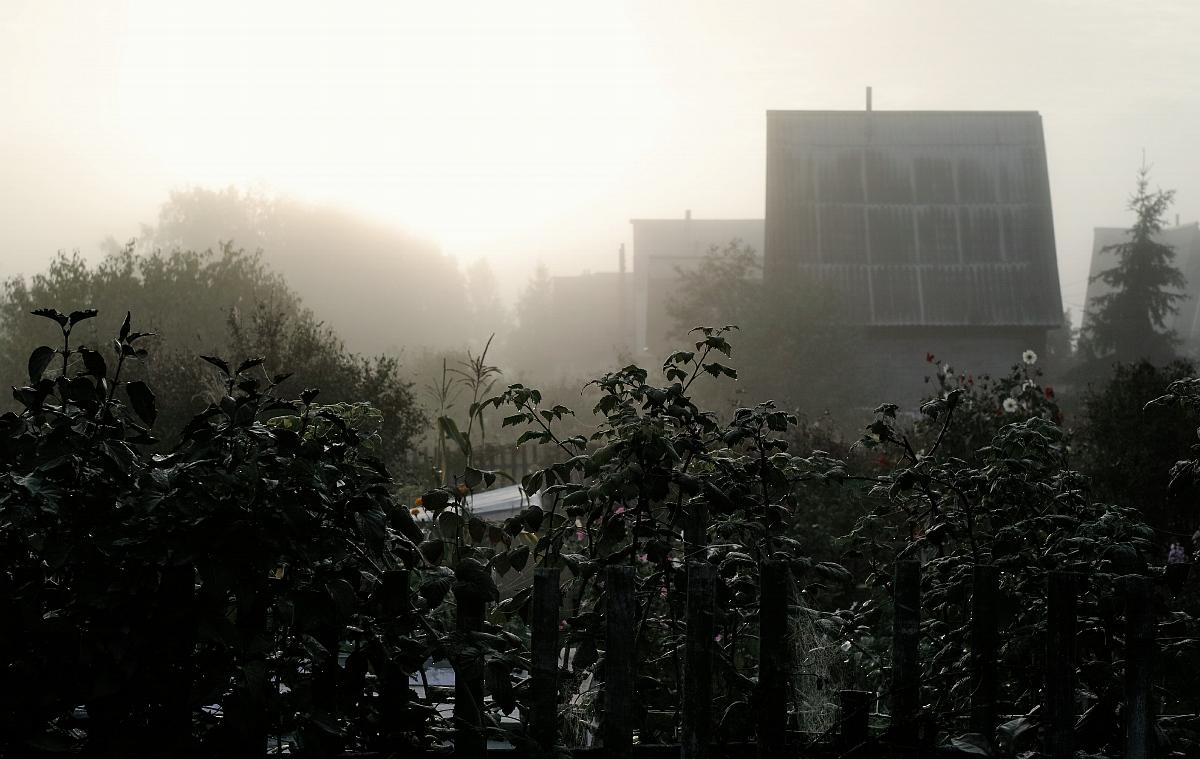 Туман, утро дождь-2