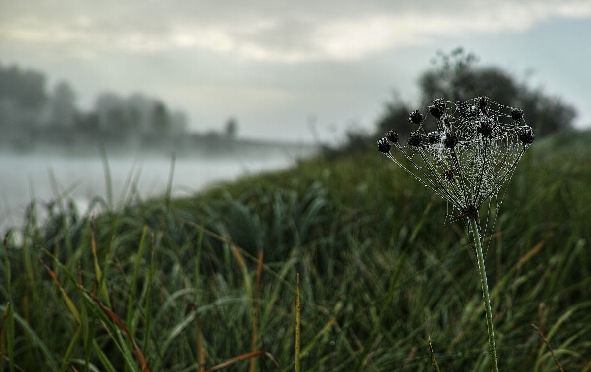 туман в паутине