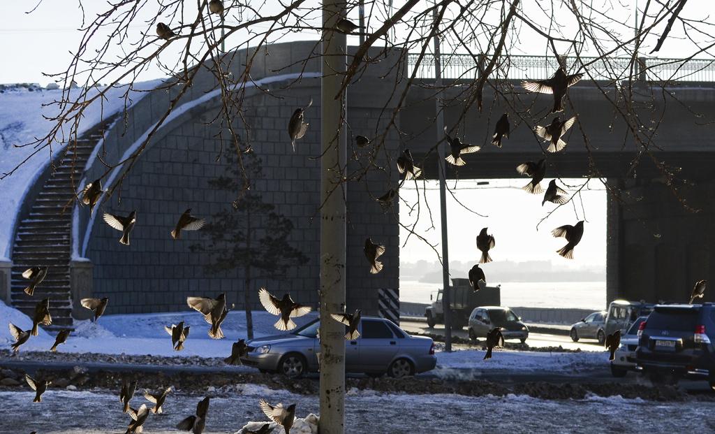 Мост и птицы...и столб.