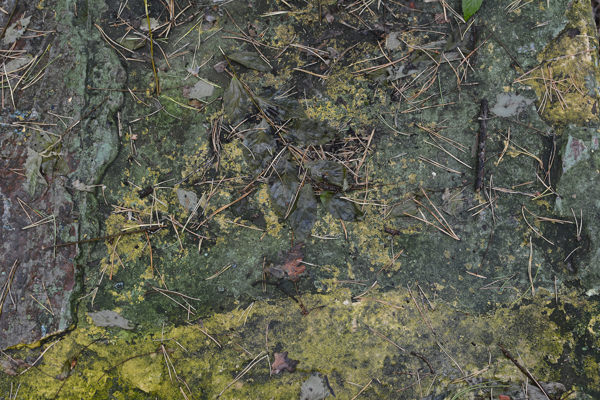 Лесные текстуры_2