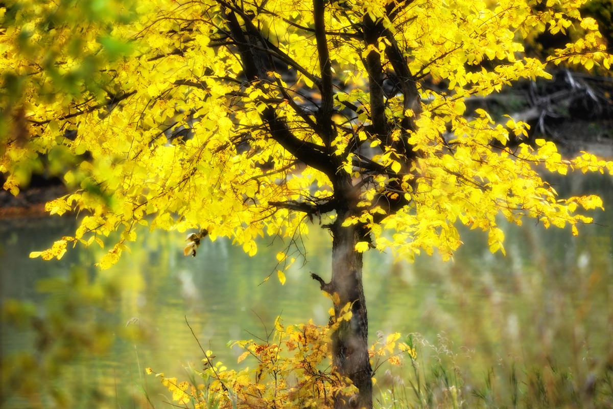 Осень-гламур