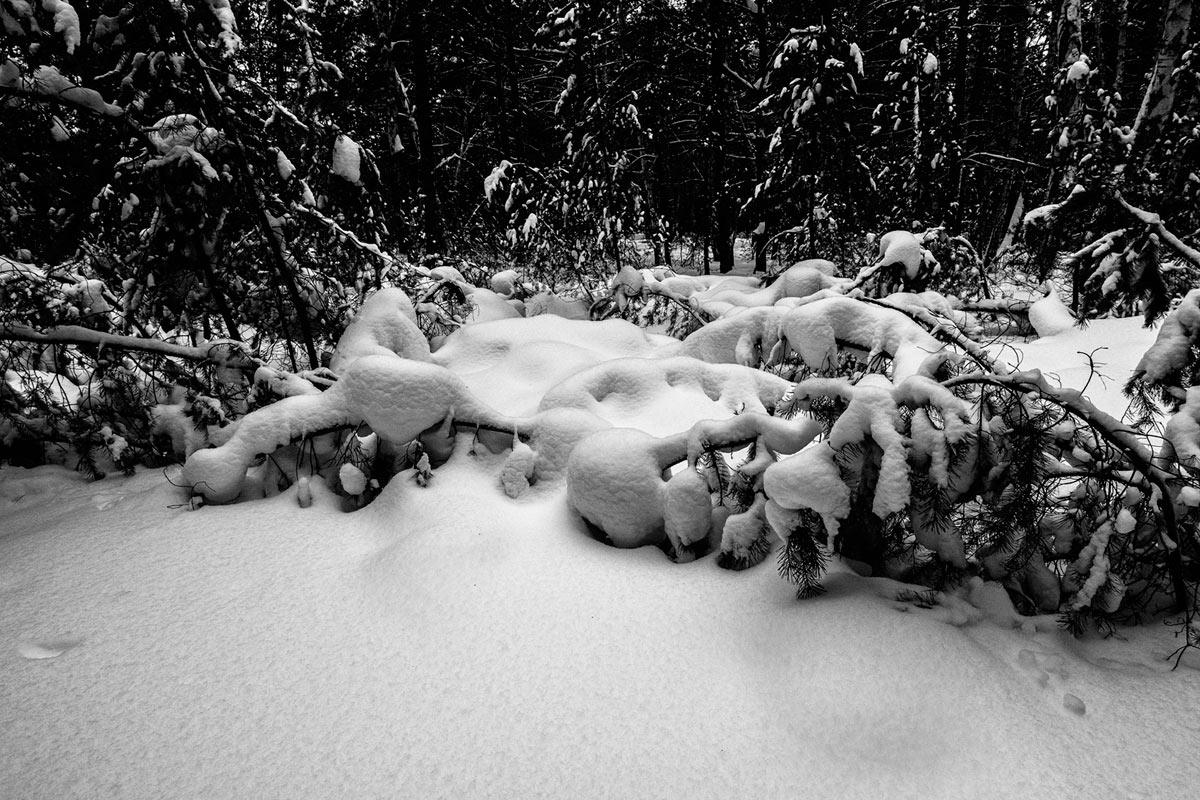 Зима 2015-6