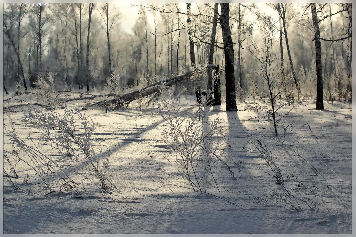 Скучный зимний пейзаж